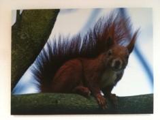 dem Eichhörnchen stehen die Haare zu Berge